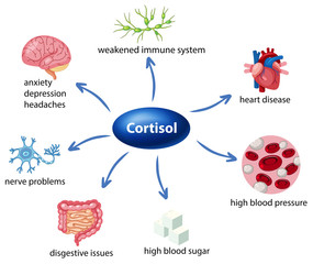 The role of cortisol in the body diagram