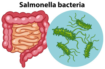 Magnified cells of Salmonella bacteria
