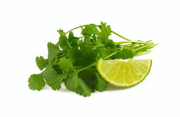 bundle of cilantro isolated on white