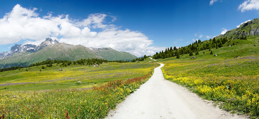 Wall Mural - idyllic mountain landscape in the summertime with a gravel road on the right side