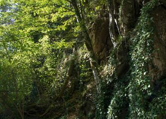 Mamed gorge on the Black Sea coast of Russia