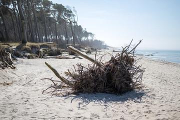 Baumstamm am Strand an der Ostsee