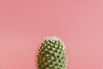Foto op Plexiglas Cactus cactus on a pink background