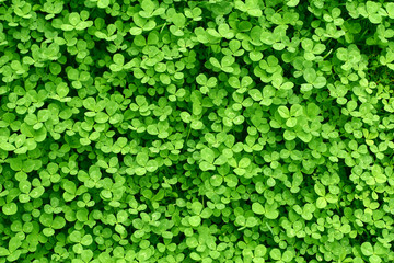 Green background with  shamrocks