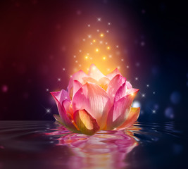 Wall Mural - lotus Pink floating light sparkle purple background