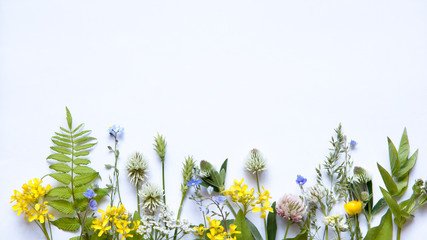 wildflowers on white background