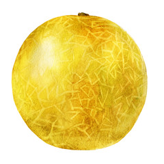 Watercolor illustration. Melon.