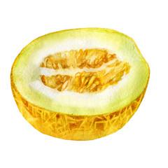 Watercolor illustration. Half a melon.