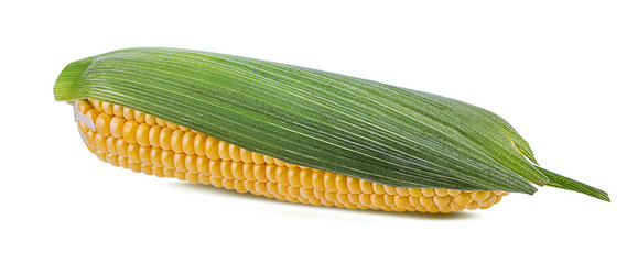 Fototapete - Corn isolated on white background