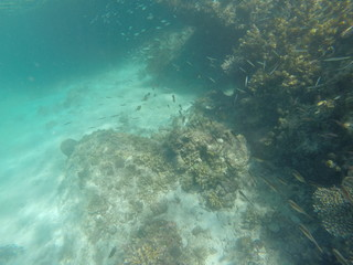 coral and school fish in a clear water during vacation