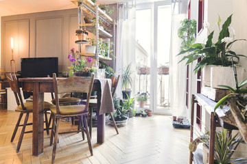 Stylish home interior with wooden shelf wit a lot of different plants, vintage table . Concept of home garden in sunny and bright space of living room.