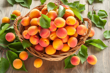 Many freshly picked ripe apricots with leaves in a basket on a wooden background