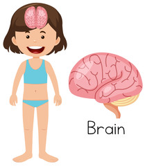 A Cartoon of Human Brain