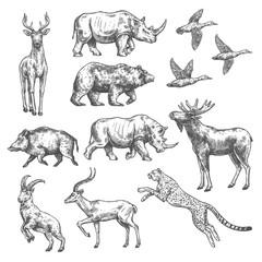 Animal sketch design of wild bird and mammal