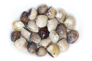 Image of Fresh enamel venus shell (Meretrix lyrata) isolated on white background,. Meretrix shell is a genus of edible saltwater clams,. Food.