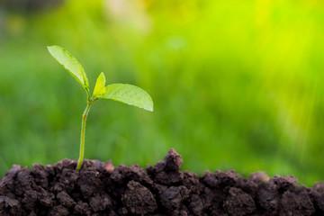 Green Tree Planting World Green