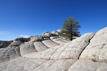 White Pocket, Vermilion Cliffs National Monument, AZ