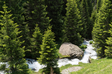 Wall Mural - small idyllic mountain stream in the middle of a pine forest in the Swiss Alps