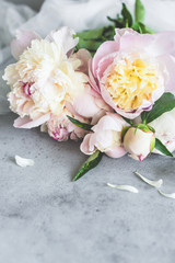 Beautiful pastel peonies on grey concrete background. Wedding, birthday, valentine's day, gift or women's day concept