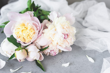 Pink White Pastel Peony Flowers On Grey Concrete Background. Wedding, birthday, valentine's day, gift or women's day concept