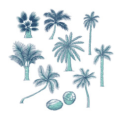 Vector set of palm. Different kinds of tropical trees and coconut. Contour sketch illustration isolated on white background.
