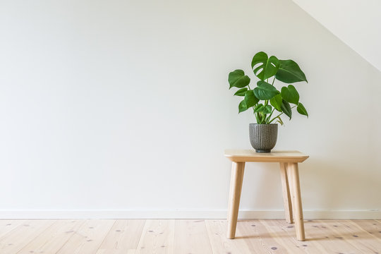 Wooden table with a potted plant, fruit salad tree (Monstera deliciosa). Empty white wall in simple living room interior. Copy space