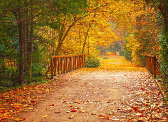 Nice pathway in the park in autumn
