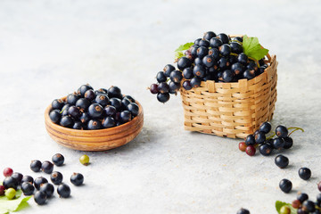 Freshly picked blackcurrants