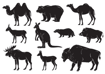 collection of wild animals on white background vector illustration
