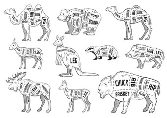 Cut of animal set. Poster Butcher diagram - wild animal. Vintage typographic hand-drawn. Vector illustration