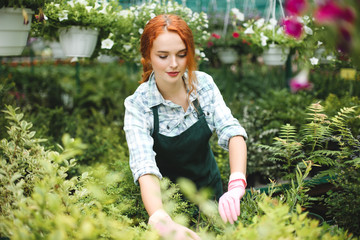 Beautiful florist in apron and pink gloves thoughtfully working with plants in greenhouse