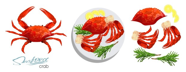 Meat crab with rosemary and lemon on the plate.Vector illustrationin cartoon style. Seafood product design. Crab, lemon, rosemary separately on a white background. Edible sea food. Vector illustration