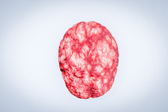 human brain with blood vessels and blood brain organ concept 3D rendering