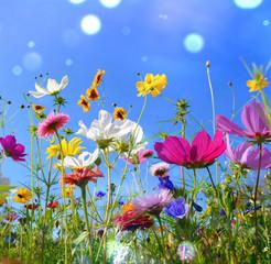 Fototapete - Blumenwiese - Sommer - Sommerwiese Hintergrund
