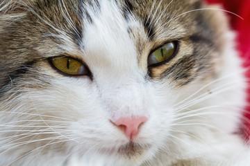 Portrait of a cat. Closeup, selective focus