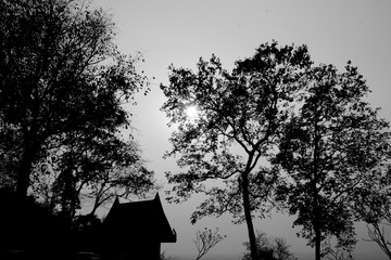 Black and white photo of tree and house.