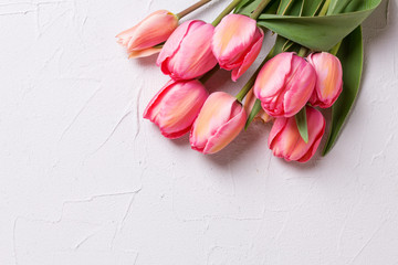 Frame  from pink tulip flowers on  textured background.