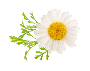 Foto op Canvas Madeliefjes chamomile or daisies with leaves isolated on white background. Top view. Flat lay