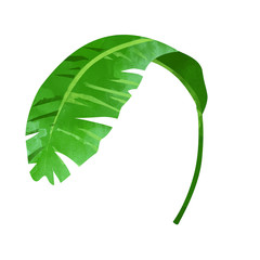 Banana leaf illustration in isolated white background.