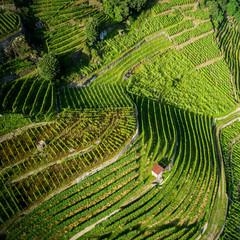 Castionetto di Chiuro - Valtellina (IT) - Vista aerea panoramica con vigneti