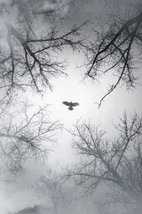 Falcon flying in sky over cloudy forest