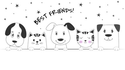 Face cats and dogs best friends white background.