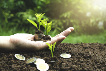 close-up hand of person holding coin with soil and young plant on the top in soft nature background