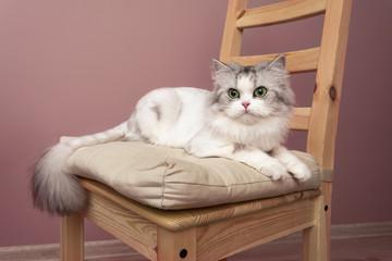 Beautiful portrait of posing cat