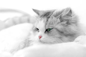 Unusual cat portrait. Shallow DOF
