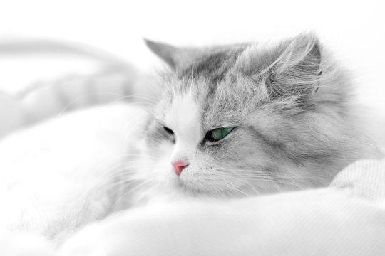 Unusual cat portrait. Shallow DOF