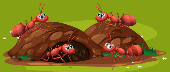 A Group of Working Ants
