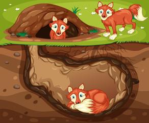 A Fox Family Living Underground