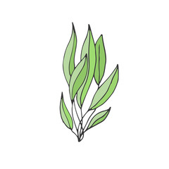 Green Seaweed illustration. Vector plant icon.