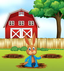 A Rabbit Digging a Hole